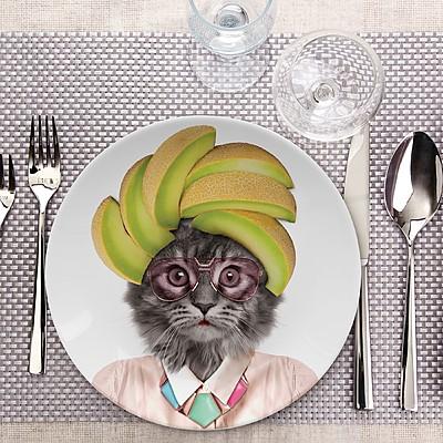 platos salvajes gato y perro