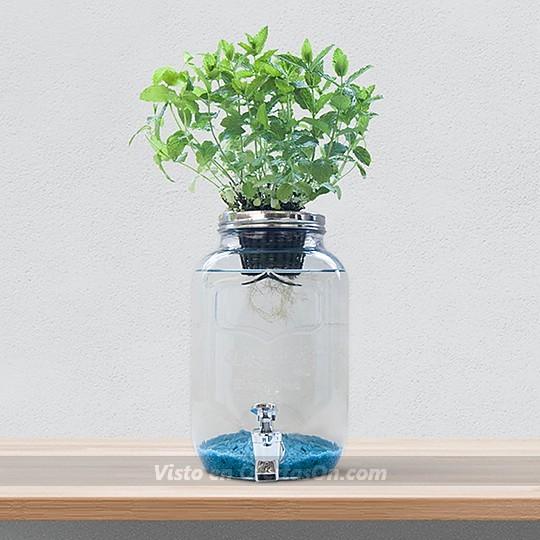 Kit de Hidroponía Creativa Blue Jar